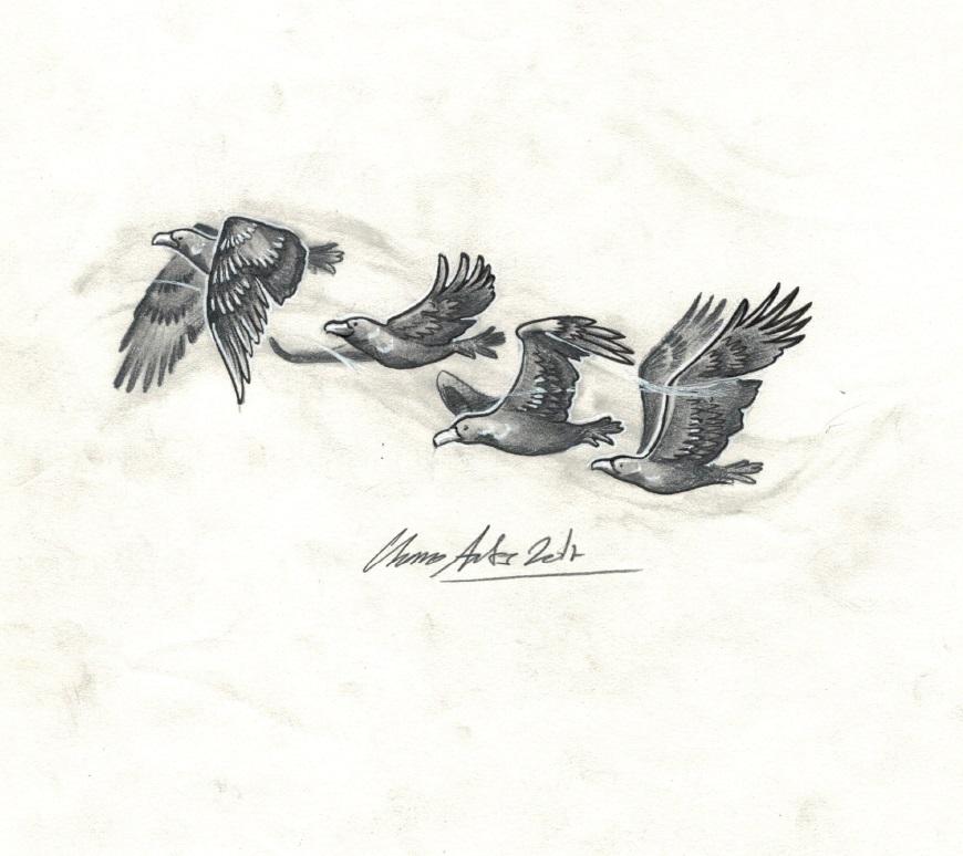 pajaros aves tattoo palencia